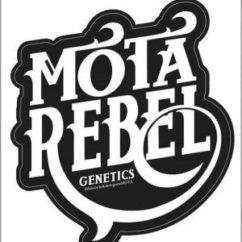 Mota Rebel