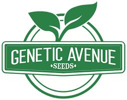 Genetic Avenue